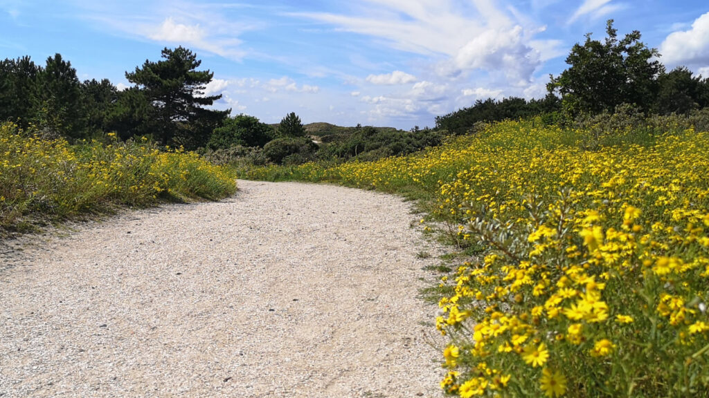 Hollandse Duinen